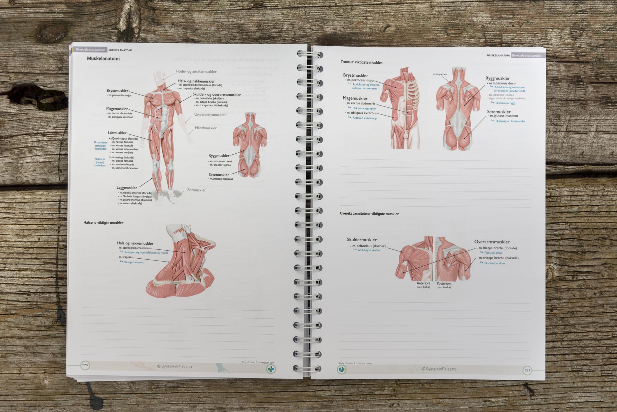 Kompendium i anatomi og fysiologi